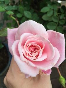 BlossomtimeBloom